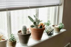 Cacti friends for your apartment