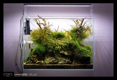 "simonsaquascapeblog: "" Favourites: display tank by Green Aqua Another beauty on the aquascape shops around Europe. Original composition and marvellously matured! """