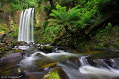 Waterfall / Hopetoun Falls  Great Otway national park, Victoria, Australia