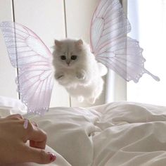 Funny Animals, Cute Animals, Kittens, Im Losing My Mind, Cat Mug, Vintage Cartoon, Future Children, Animal Pictures, Cute Cats