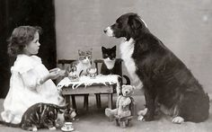 """Animal tea party - 1900-1910. """"I hope she's serving those delicious mice vol-au-vents today."""" """"Or at least the tuna surprise."""" """"This cream is superb; you can have my vol-au-vent."""" """"A big bone wouldn't go amiss."""" """"Just don't drool on my head like last time, Rover."""""""