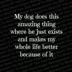 On dogs