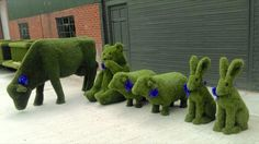 This motley crew are on their way to their forever home! We will miss them! http://www.easigrass.com/uk/accessories/animals/ #easigrass #animals #zoo #artificialgrass #fakegrass