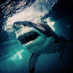 NIGHTMARES ARE MADE OF THIS ... IF YOU'RE IN THE  OCEAN.