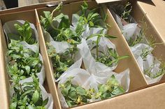 "plant packing boxes - ""Google"" paieška"