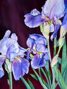 "Contemporary Painting - ""Iris, Iris, Iris"" (Original Art from Judy Nunno).  Watercolor"