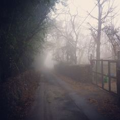 Our street on a foggy morning.