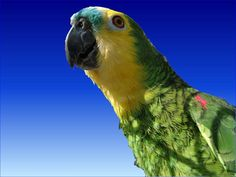 These all type of parrots with funny fact. Parrots are so bright and colourful that it can be hard to take a bad shot. Funny Facts, Funny Jokes, Parrot Facts, Bird Types, Colorful Birds, Get Outside, Beautiful Birds, Animal Photography, Pet Dogs