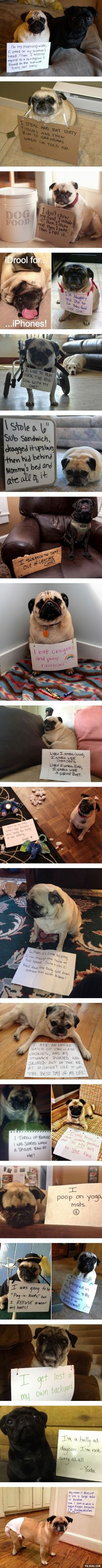 dog shaming - pug compilation {Pugs are my favorite cause they're so cute & little. These guys & they're bad deeds make them adorable❤❤} Animals And Pets, Funny Animals, Cute Animals, Cute Pugs, Cute Puppies, Pug Love, I Love Dogs, Pekinese, Dog Shaming