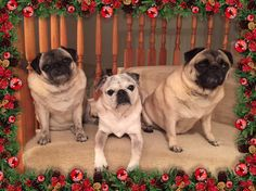Merry Christmas to All! -Sandi, Lacey & Waffles