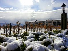 Ponte vineyard inn - rare snow storm hits wine country in southern California on new years eve 2014.