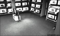 Quando um gênio resolve roubar