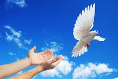 Hands released into the sky to the white dove Stock Photos , Dove Release, Dove Pictures, May We All, Shine The Light, Mixed Emotions, White Doves, All Is Well, Buy Posters, Cool Photos