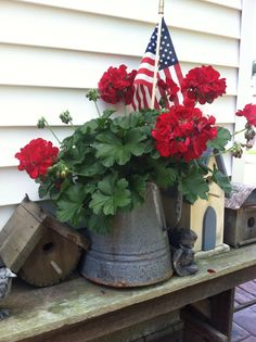 Red geranium in an old coffee pot.