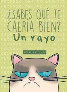 Grumpy Cat, Mr Cat, Funny Cats, Funny Animals, I Love Cats, Jokes, Funny Memes, Hilarious, Funny Phrases