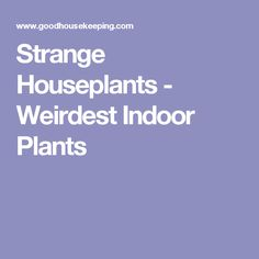 Strange Houseplants - Weirdest Indoor Plants