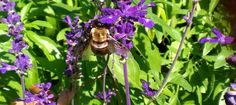 Pollinating And Painting A Better Garden | Fresh Life Now