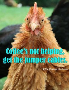Coffee's not helping, get the jumper cables.  ~The Chicken Chick