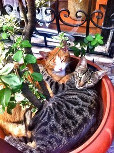 lovely cats ...