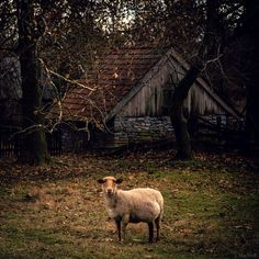 expecting ewe by Jennifer MacNeill on Flickr.