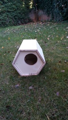 Cat house (hexagon)