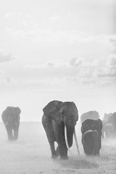 monochromacity: 'Elephants, Amboseli, Kenya' by Stephane Perrier