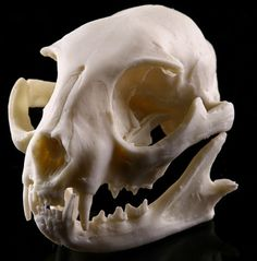 Cheap skeleton model, Buy Quality model skull directly from China skull school Suppliers: Cat Resin Model Skull School Medical Animal Skeleton Model Supplies Teaching Resources Cat Skull Mold Halloween Home Decor Cat Skeleton, Skeleton Model, Animal Skeletons, Animal Skulls, Crane, Skull Model, Model Supplies, Reptile Terrarium, Sculptures