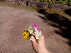 Kaikki kukat saavat kukkia!