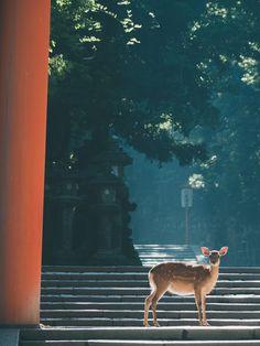 春日大社 Asia Travel, Japan Travel, Japanese Photography, Thriller, Dark City, Aesthetic Japan, Japanese Landscape, Mystery, Nara