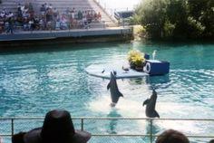 Etwa eine Woche nach der Rave-Party starb der erste Delfin, Shadow, ein paar Tage darauf starb Delfin Chelmers. Wenn die Obduktion ergibt, dass die Todesfälle tatsächlich auf die Rave-Party zurückzuführen sind, werden wir Strafanzeige gegen die Verantwortlichen erstatten, die leichtsinnig mit dem Leben der Delfine umgegangen sind.
