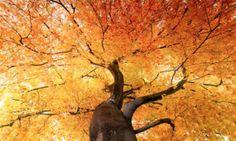 In der Natur existiert nichts ohne Grund. Der Duft einer Blume, das Aroma einer Orange, der Geruch einer Kiefer – alles erfüllt eine für die Pflanzen lebenswichtige Aufgabe. Was wir als Duft wahrnehmen, sind eigentlich flüchtige, aromatische Verbindungen, winzige organische Moleküle. Die eine Painting, Kiefer, Roots, Orange, Art, Plants, Nature, Flowers, Art Background
