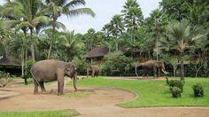 Elephant Safari Park in Bali