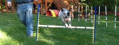 """Agility Equipment 101 