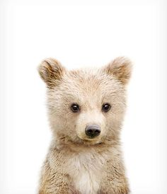Baby bear cub print Nursery art Woodland animals PRINTABLE