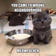 Fear Me! Meowww :3