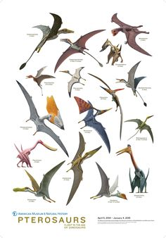 AMNH Shop | Pterosaur Poster - Posters and Art - Category