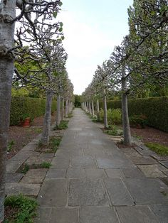 allee of hornbeams at Sissinghurst Castle [think this was the first allee /and pleaching I read or even knew about]