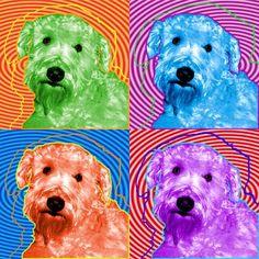 Wheaten Terrier :-)