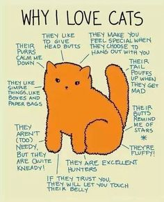 Why I love cats! (Some reasons)