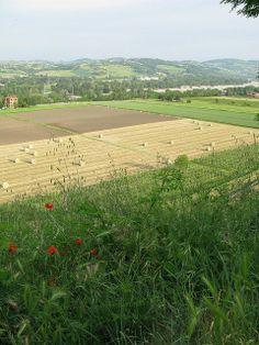 Serene Countryside of Torrechiara, Emilia Romagna, Italy