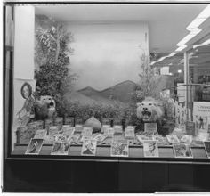 """Vromans bookstore """"I Married Adventure"""" window display, 469 East Colorado, Pasadena. Digital History, Huntington Library, Library Science, Store Window Displays, Old Gas Stations, Store Windows, Lions, The Past, Art Gallery"""