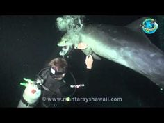 Dolphin Lets Diver Know it Needs to be Rescued. It had fishing line around its fin and he came up to the diver in efforts to have it removed. They truly are Highly intelligent creatures.