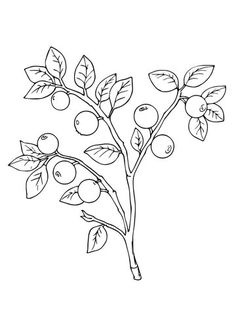 Bilberry or Whortleberry coloring page from Berries category. Select from 26524 printable crafts of cartoons, nature, animals, Bible and many more.