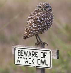 PetsLady's Pick: Funny Owl Sign Of The Day ... see more at PetsLady.com ... The FUN site for Animal Lovers