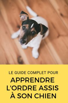 It is important to have patience and to start teaching basic dog commands as soon as possible. Teaching a dog basic commands will improve your bond and . Puppy Training Tips, Training Your Puppy, Best Puppies, Dogs And Puppies, Reptiles Et Amphibiens, Dog Commands, Dog Care Tips, Dog Hacks, Dog Behavior