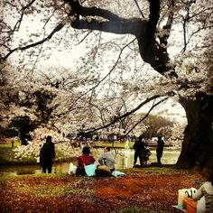 Guide to Tokyo Outdoors: Travel Guide on TripAdvisor