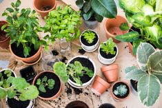 Non-toxic ways to keep pests away and enrich the soil – for urban farmers!