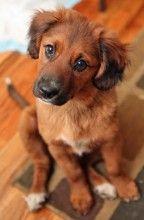 Puppy Pal from www.cutestpaw.com