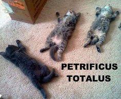 Petrificus Totalus!
