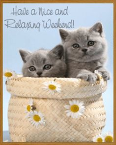 Image result for happy caturday picmix